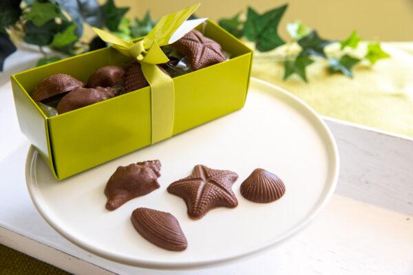 Milk Chocolate Sea Shells